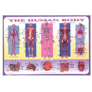Human Body Placemat