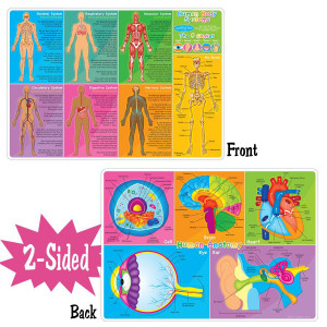 Human Body Smart Poly 2-Sided Learning Mat