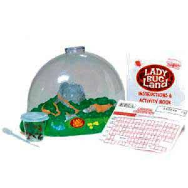 Ladybug Land
